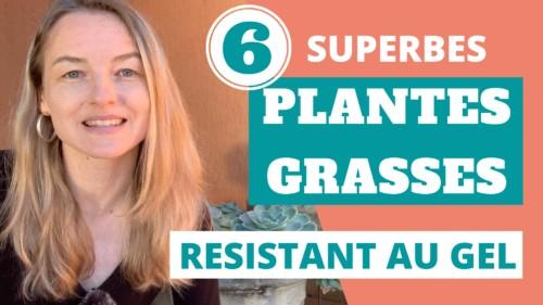 les variétés de plantes grasses exterieur