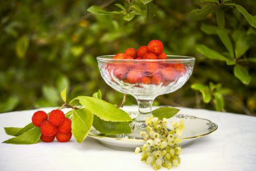 les arbouses sont les fruit de l'arbuste persistant arbousier
