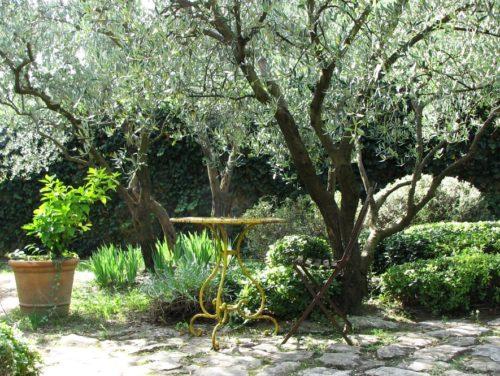 olivier planté à côté de la terrasse sans risque pour la dalle béton de la terrasse