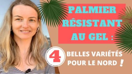 Conseils de paysagiste sur les palmiers résistants au gel