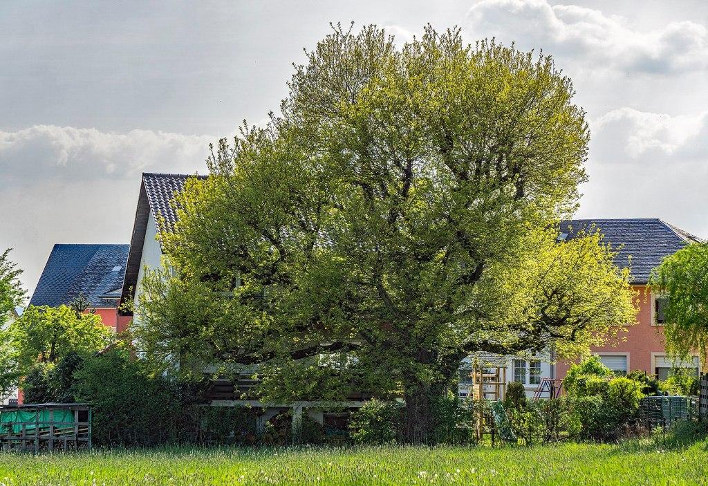 arbre de plus de 30ans à moins de 2m de la limite de propriété