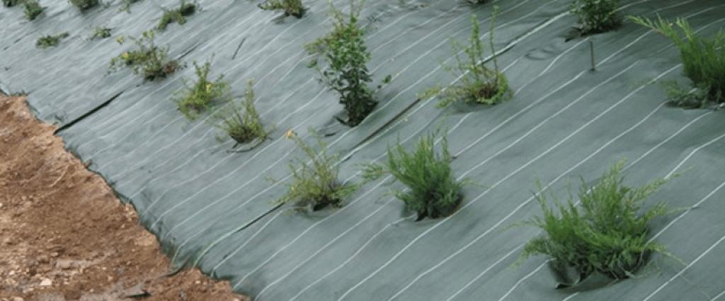 massif de plantes avec toile tissée en plastique vert