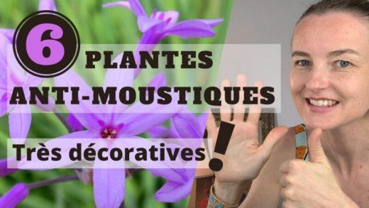 Plantes contre les moustiques