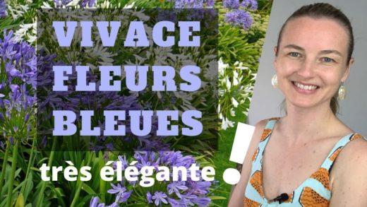 une vivace à fleurs bleues très élégante pour votre jardin