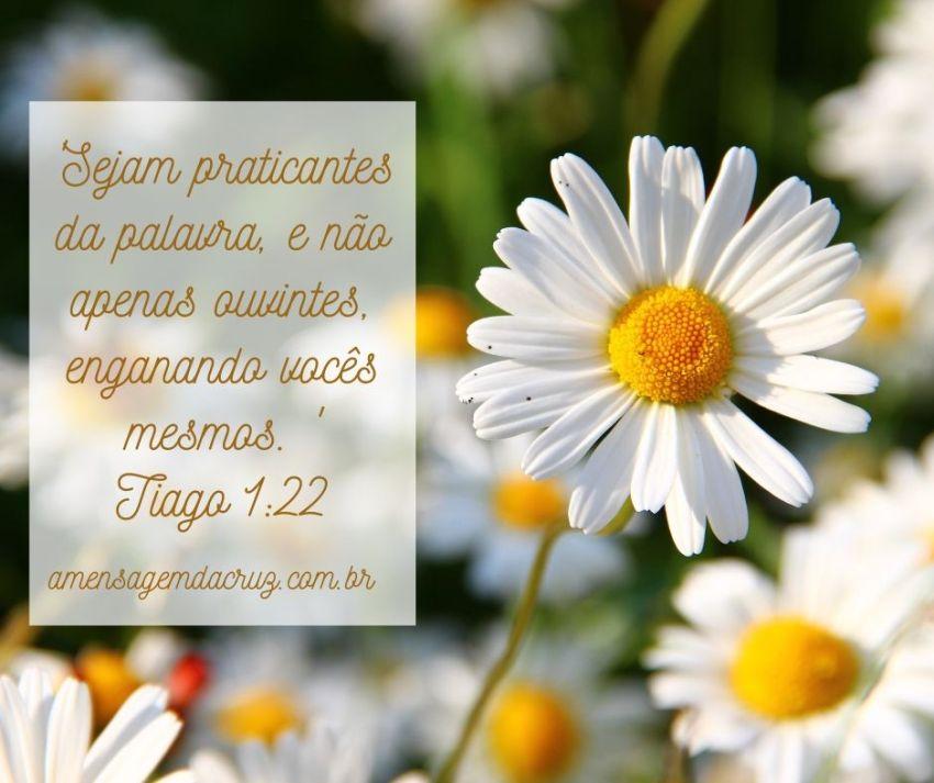 Versículo Bíblico do Dia: Praticantes da Palavra