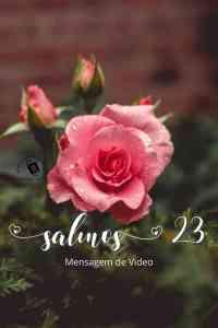 Salmos 23 - Uma Mensagem Bíblica Especial - Video com uma bela rosa com botoes e texto bíblico de salmos 23