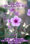 A paz do Senhor Jesus - Louve ao Senhor