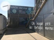 ARCA del Mar, una visita al hospital de tortugas marinas en el Oceanogràfic de Valencia