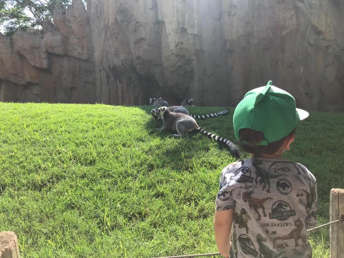 lemures bioparc