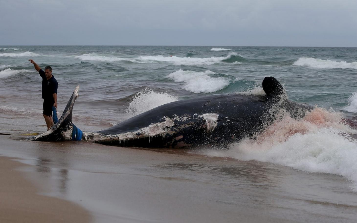 Study Ocean Life Faces Mass Extinction