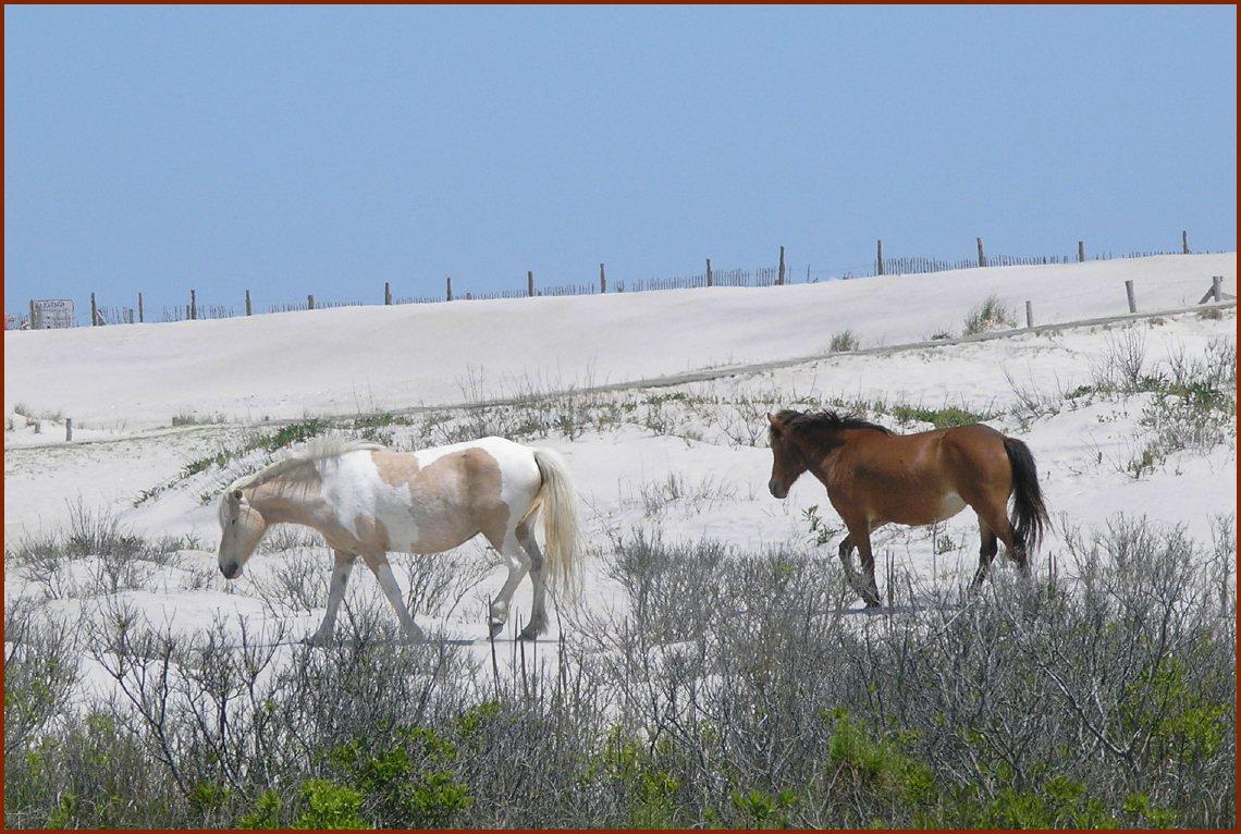 Wild Ponies — © 2008 America InContext