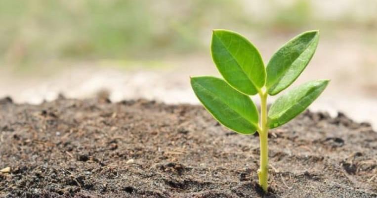 Inversiones extranjeras y sustentabilidad ecológica