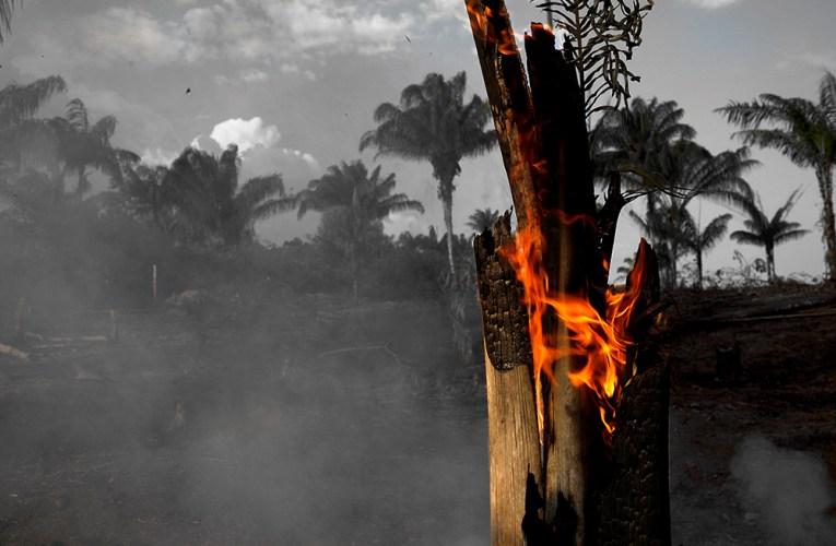 Por ecocidio en Amazonas piden que España salga del acuerdo Mercosur-UE