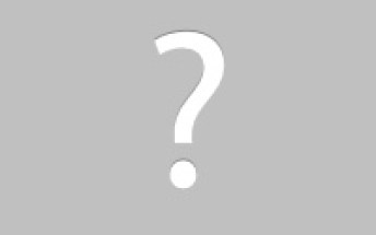 Animal Removal Goshen, Indiana bat removal image