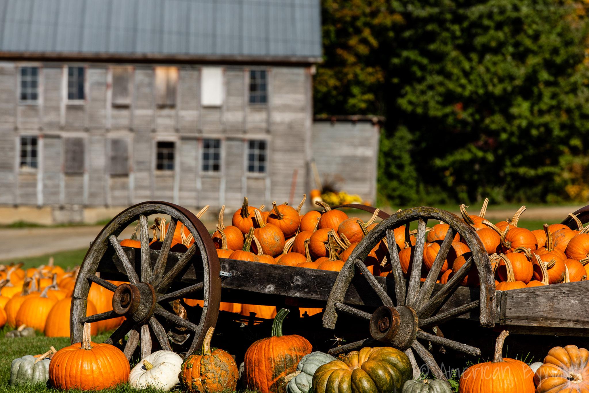 Stowe Pumpkins