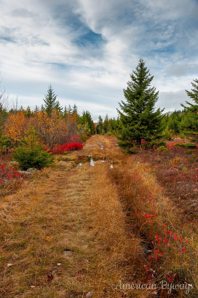 Dobbin Grade Trail (No. 526)