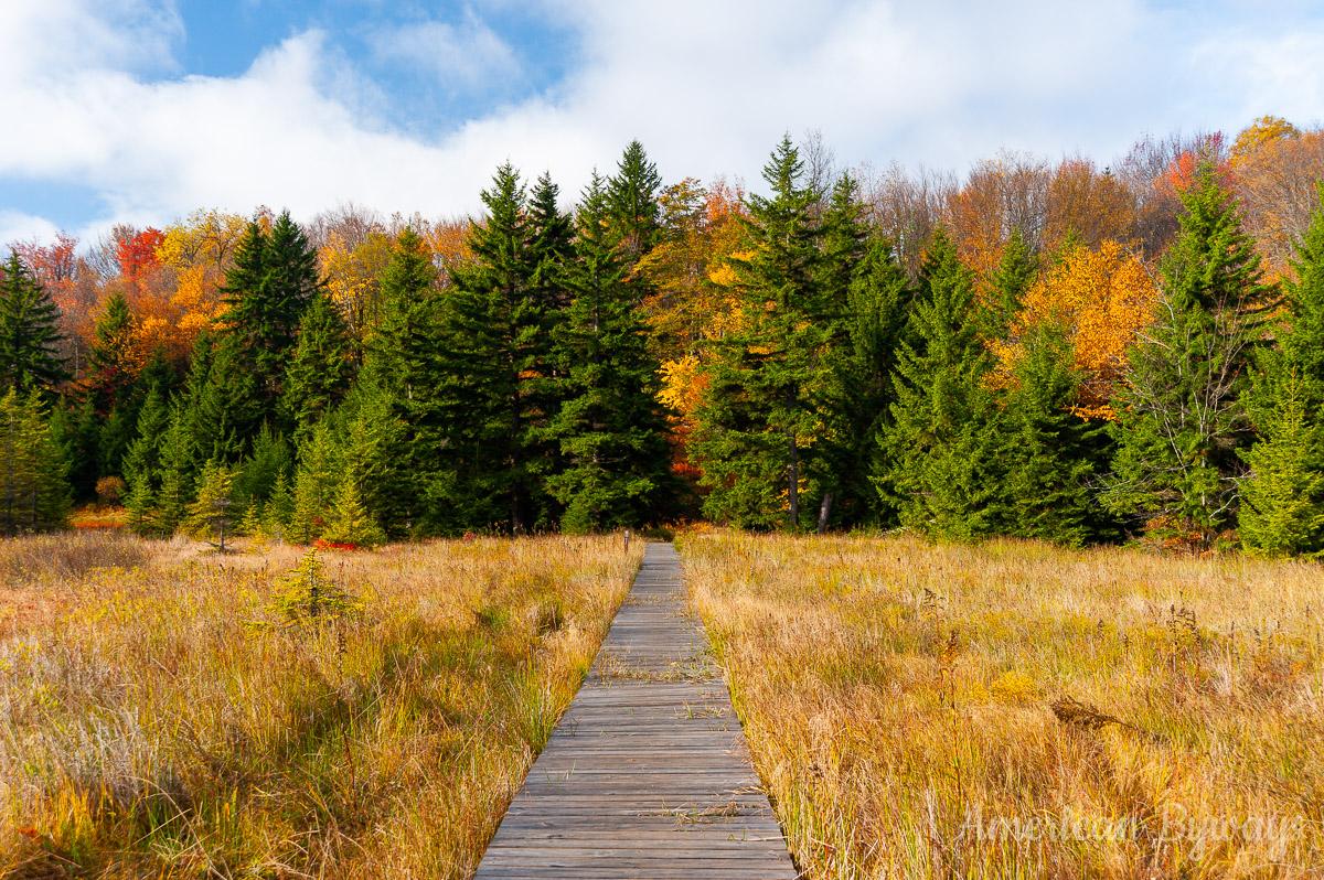 Bear Rocks Trail (No. 522) and Balsim fir