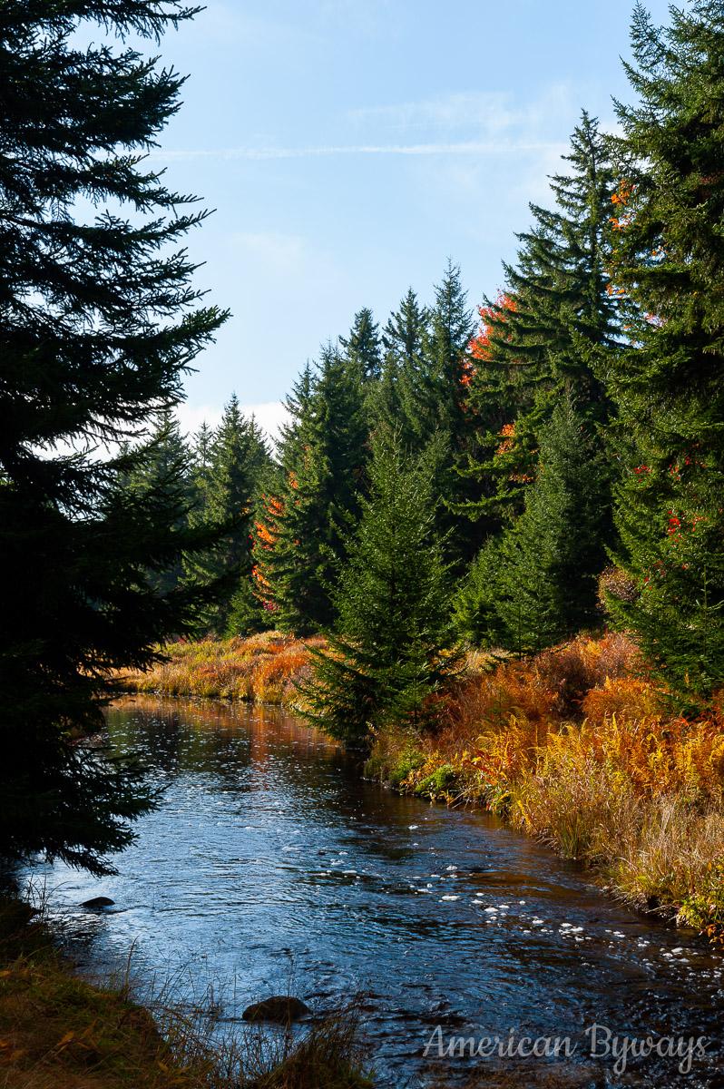 Red Creek and Balsim fir