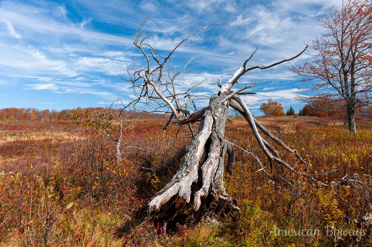 Along the Raven Ridge Trail (No. 521)