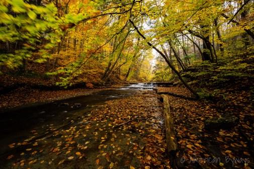Gulf Creek