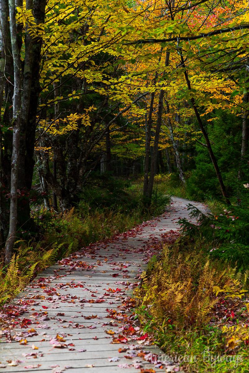 Bear Rocks Trail (522)