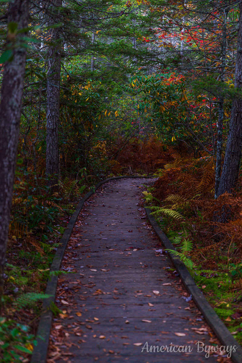 Cranberry Glades Boardwalk (222)
