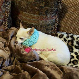 Vintage Lace Dog Collar | Free Crochet Pattern | American Crochet @americancrochet.com #freecrochetpattern