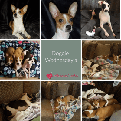 Doggie Wednesday's Week Two