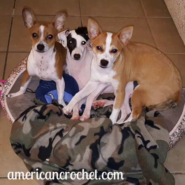 Doggie Wednesday's   American Crochet @americancrochet.com