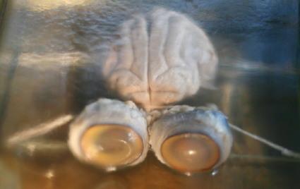 brains27.jpg