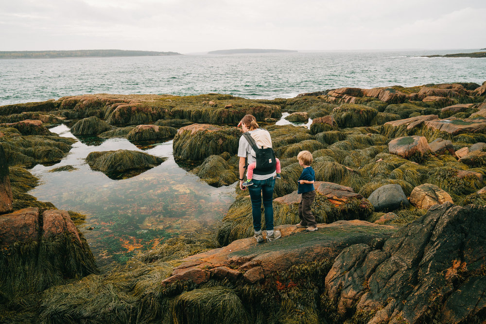 mom and kids looking at tide pools in acadia national park