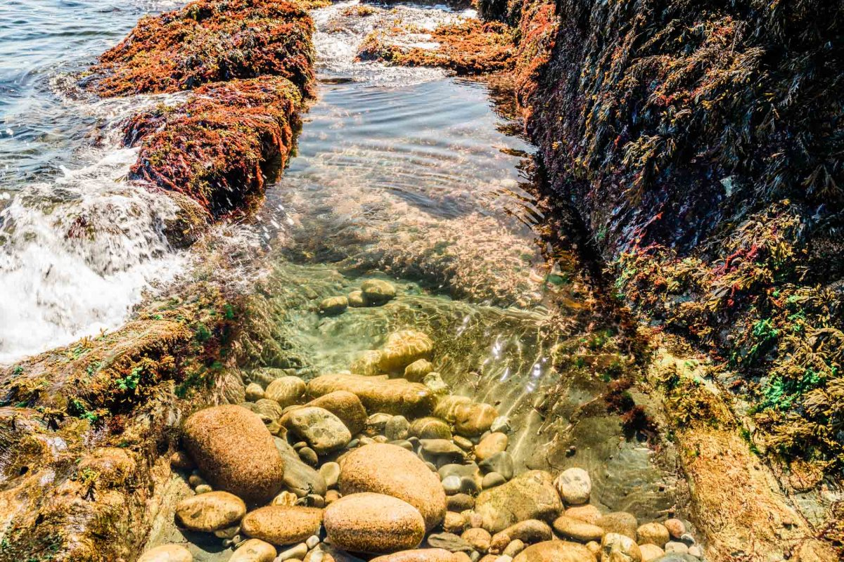 a view of a tidepool in acadia national park