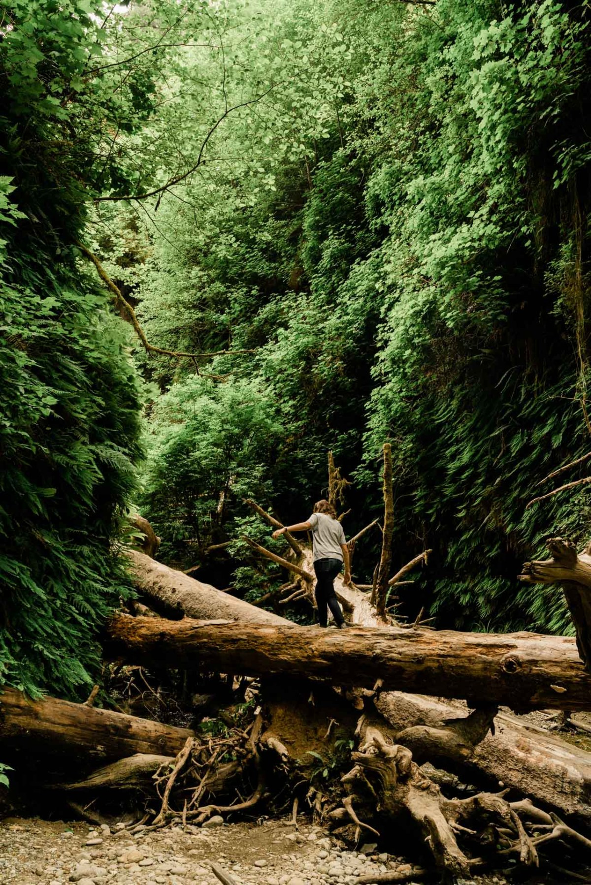 woman hiking up a log in fern canyon in redwood national park