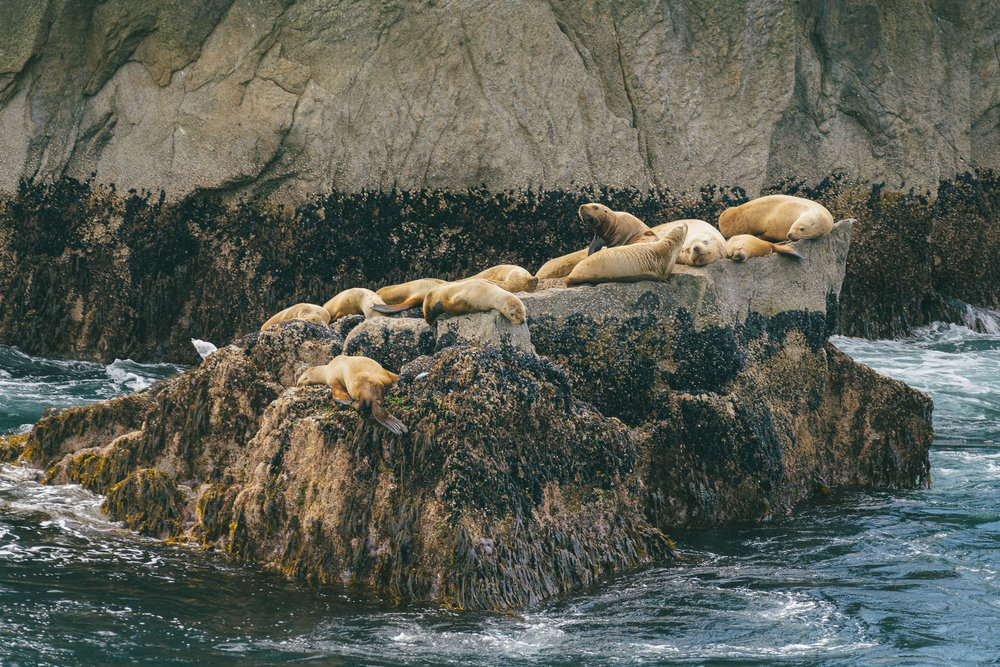 Stellar sea lions. Truly stellar. I feel a real kinship with them and their floppiness.