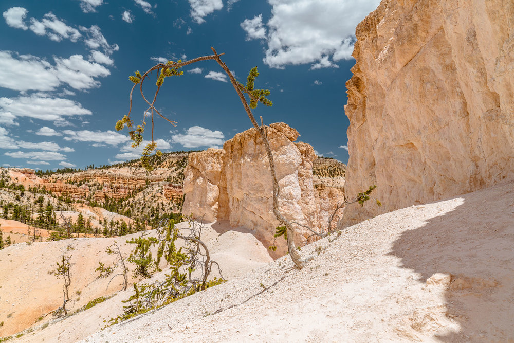 Bryce Canyon National Park - American Field Trip