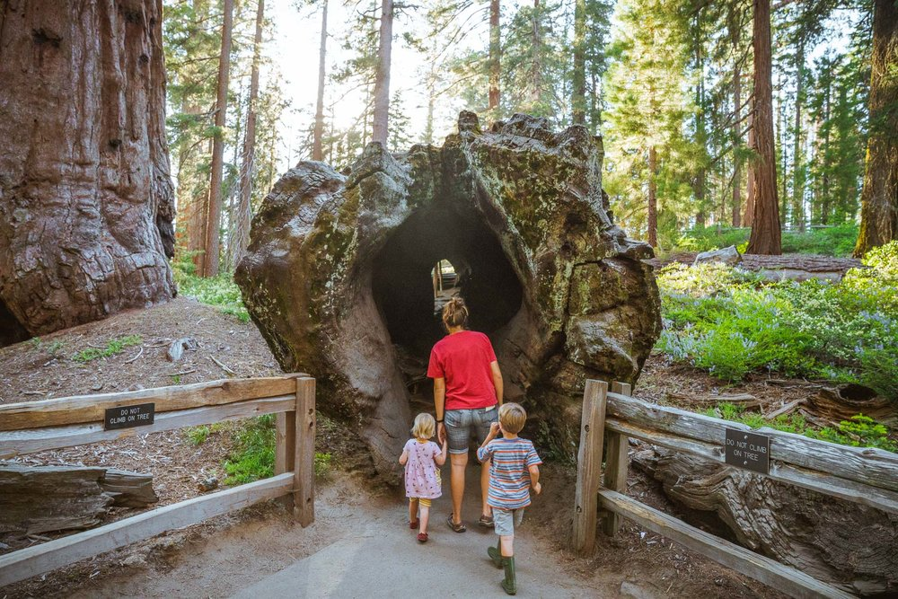 family with kids hiking in kings canyon national park