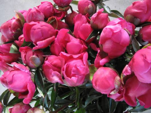 Beth has donated a box of 20 stems of her gorgeous Alaska peonies to the July 4th American Flowers Week drawing!