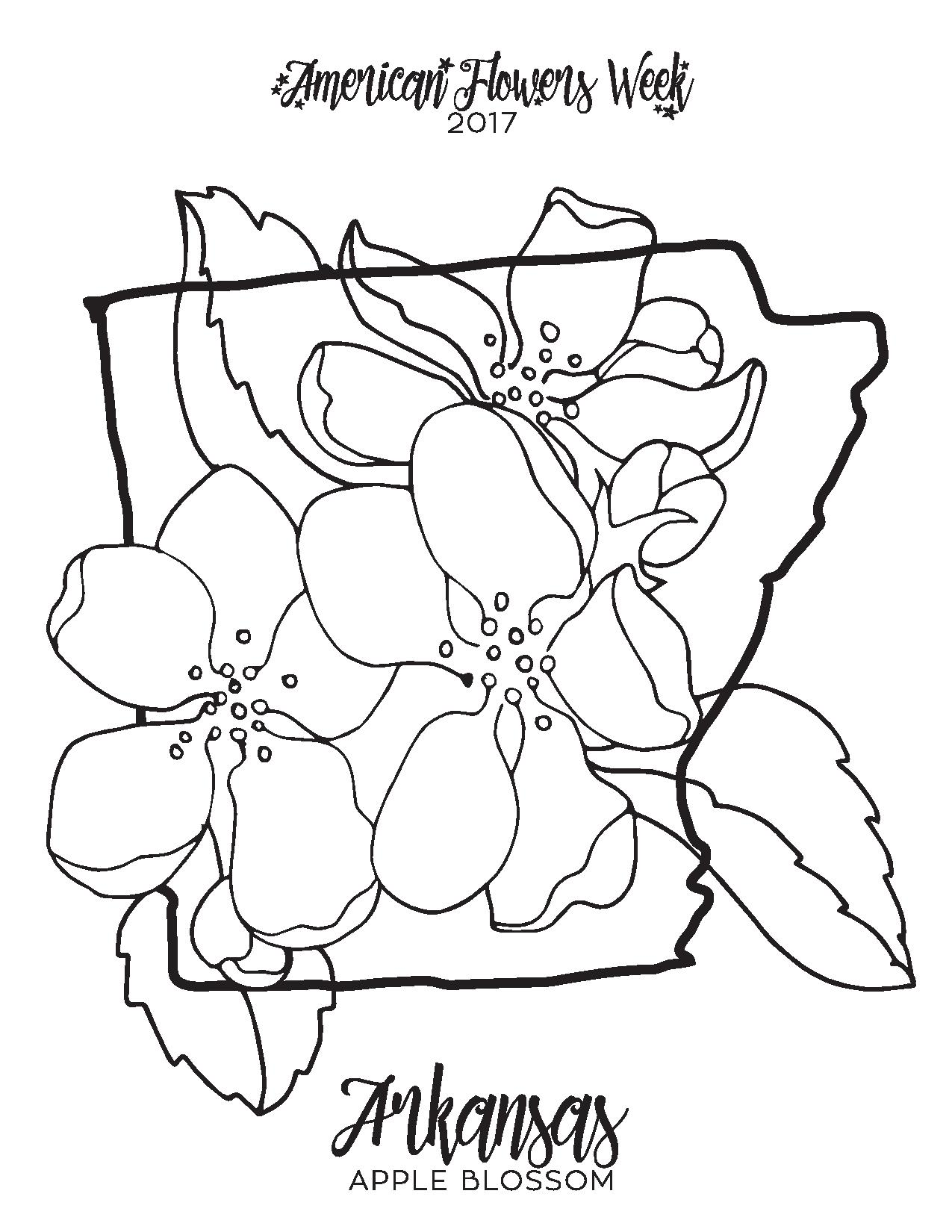 Top Florida State Flower Coloring Page