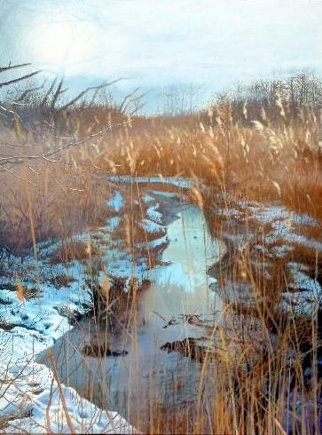 Bulrushes In Winter