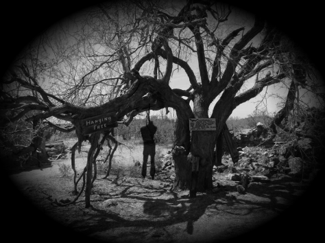 Hanging Tree at Vulture Mine - Ghost of a Thief Hanging from Tree