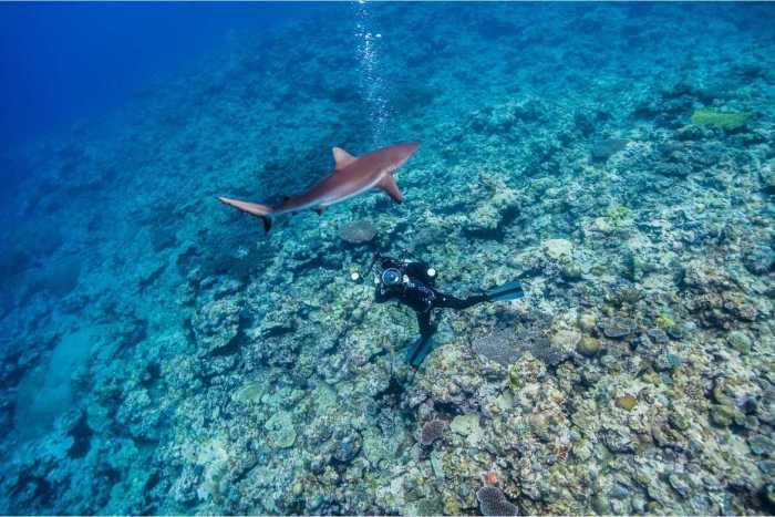bucear-con-tiburones