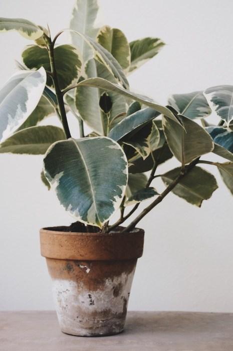 plantas casa