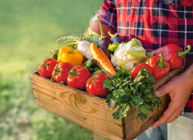 Los ingredientes básicos para preparar ensaladas son: lechugas, jitomate, espinaca, cebolla, pimiento, zanahoria, calabacitas y champiñones.