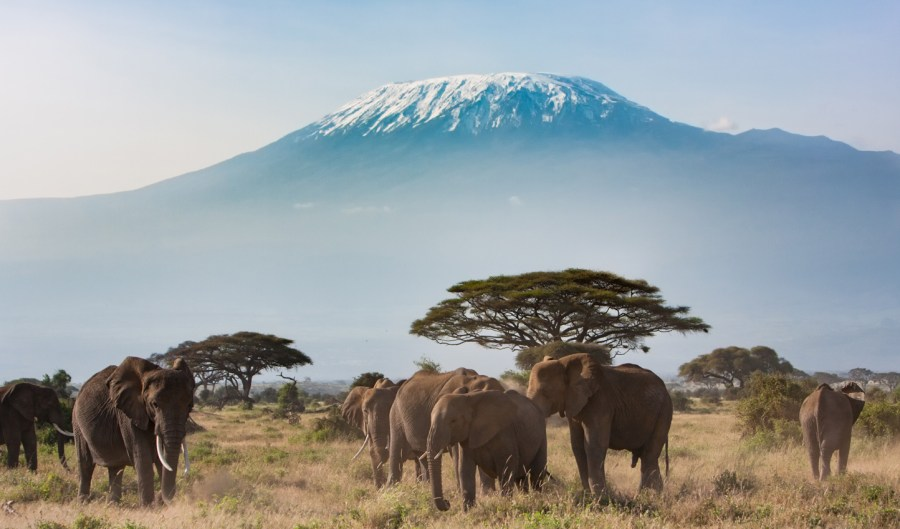 kilimanjaro africa