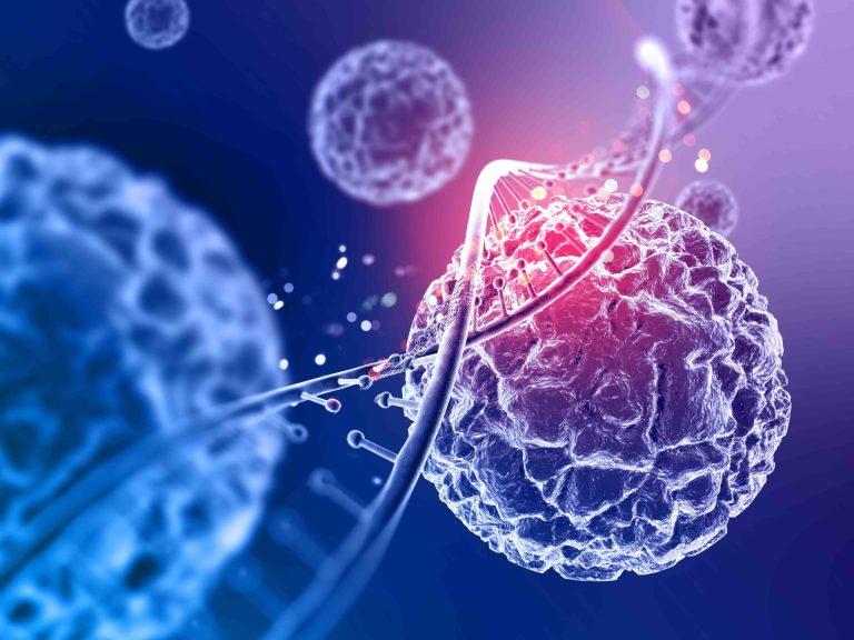 Qué son las Células T y cómo generan inmunidad oculta contra el Covid-19