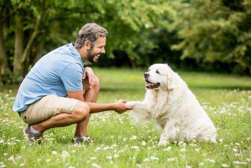 3 Trucos básicos para entrenar a tu perro y lograr una sana convivencia