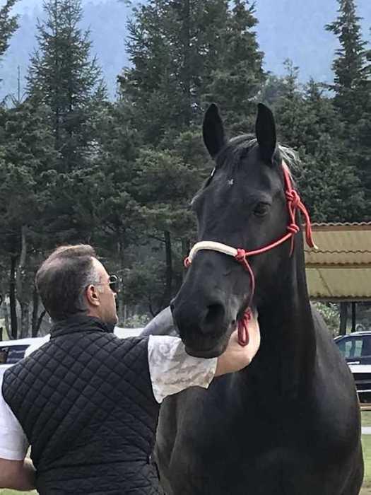 Tanto en el mundo ejecutivo como en el personal, el entrenamiento con caballos tiene múltiples beneficios en el crecimiento personal.