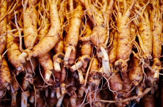 El ginseng es otra de las mejores hierbas para desinflamar que puedes consumir después de entrenar.