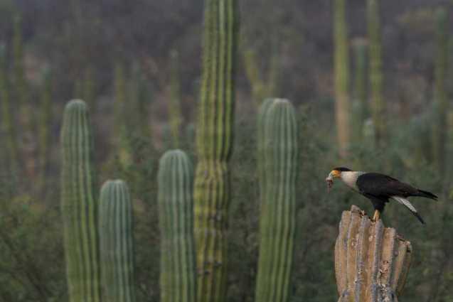 Avistamiento de aves en la Reserva de la Biosfera Sierra La Laguna