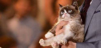 grumpy-cat-on-american-idol